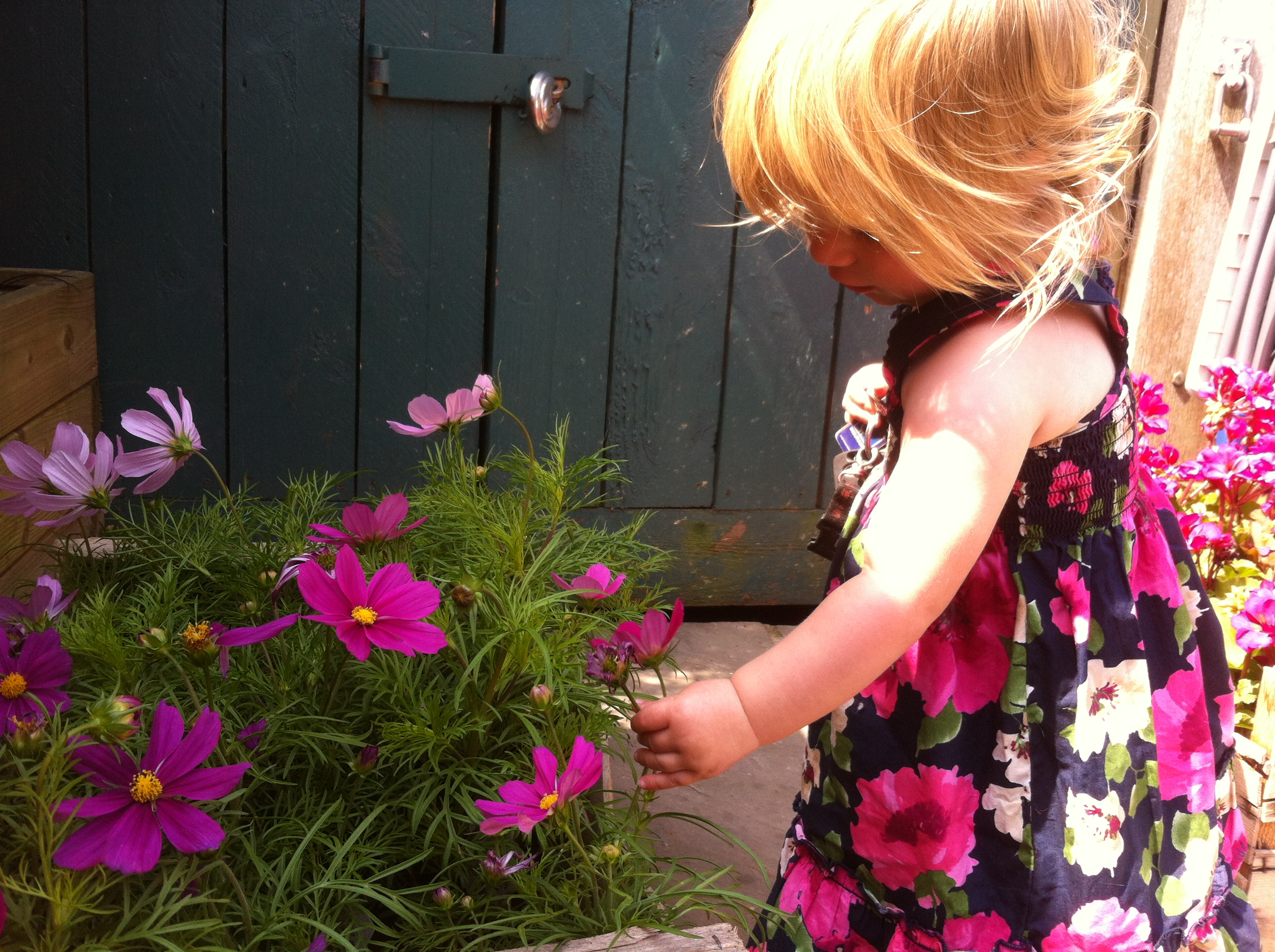 lets hope that Leah doesn't pick all the flowers before we have time to plant them!