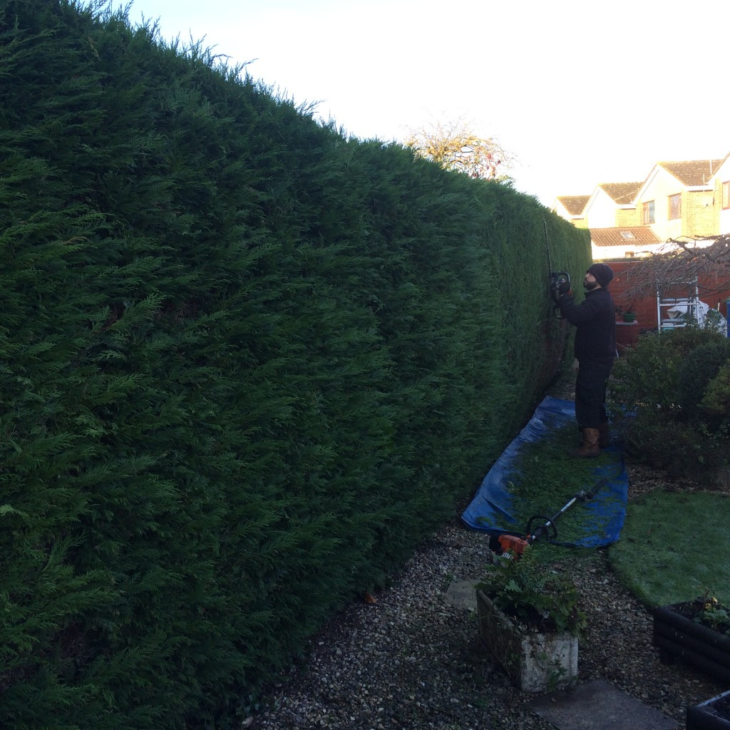 Large hedge trimming Bristol
